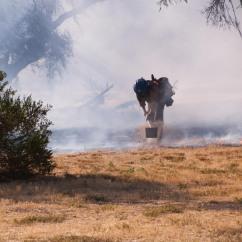 Brushfire2WebLG