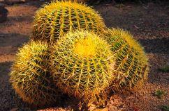 DSC_5856.cactus2WebLG