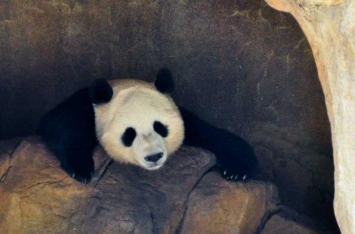 DSC_5865.PandaWebLG