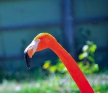 DSC_5874.flamingoWebLG