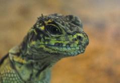 DSC_5951.LizardWebLG