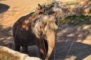 DSC_5977.ElephantWebLG