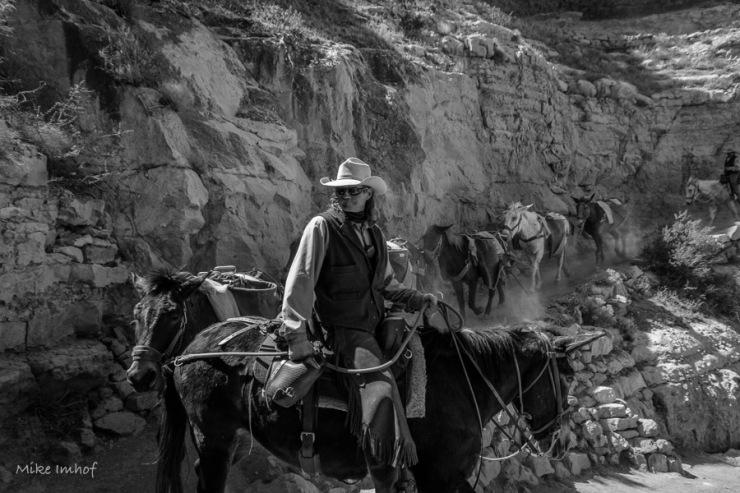 Mule Team Leader