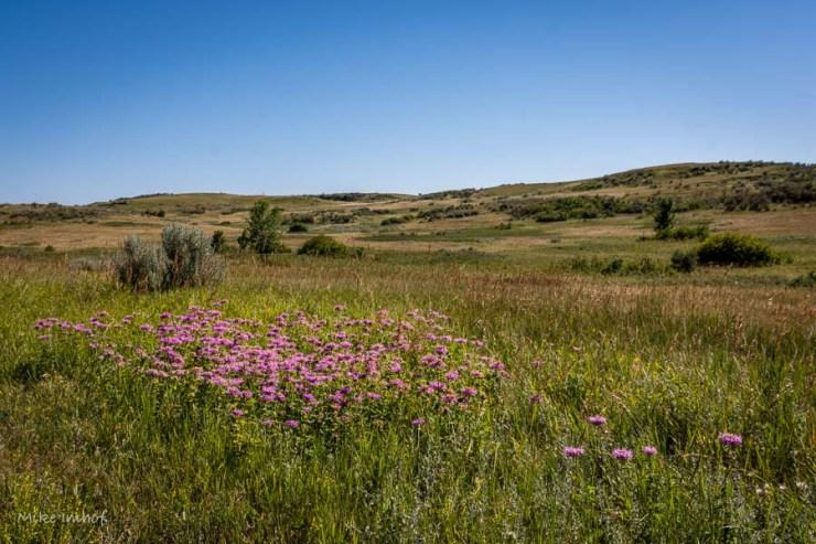 Grassland Prarie2