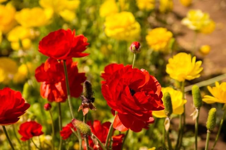 Flower Fields3